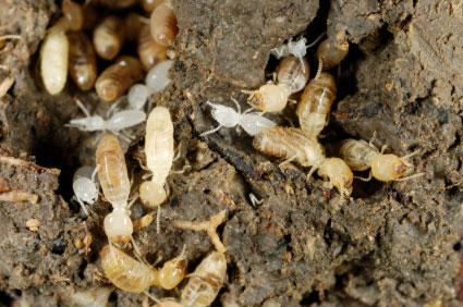 pest control scholarship
